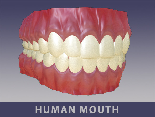 Full Mouth Set - 3DOcean Item for Sale