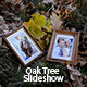 Oak Tree Slideshow - VideoHive Item for Sale