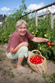 Woman reaps a crop of tomatoes - PhotoDune Item for Sale