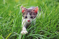 Young domestic cat - PhotoDune Item for Sale