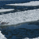 Seagull on ice Floes Drifting in the Sea - VideoHive Item for Sale