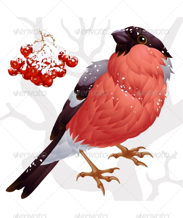 Vector bullfinch and ashberry ? 02 - Seasons/Holidays Conceptual