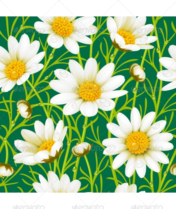 Camomile seamless background - Backgrounds Decorative