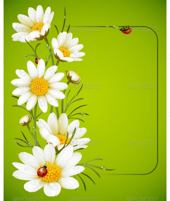 Camomile frame - Seasons/Holidays Conceptual