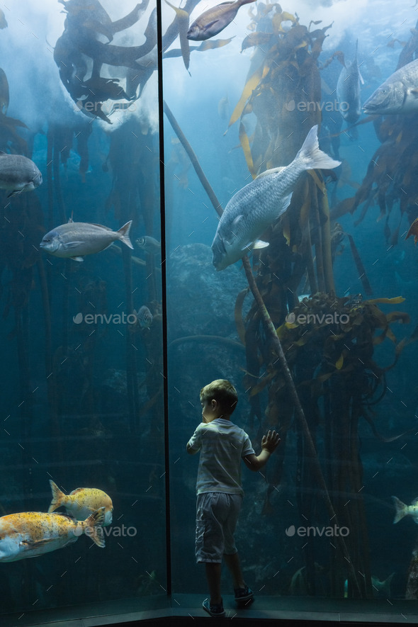 Little boy looking at fish tank at the aquarium - Stock Photo - Images