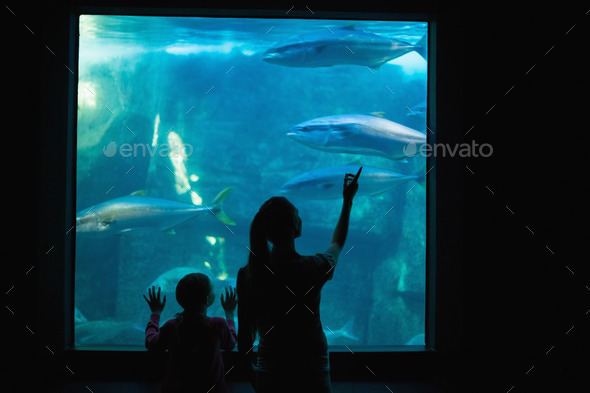 Happy mother and daughter looking at tank at the aquarium - Stock Photo - Images