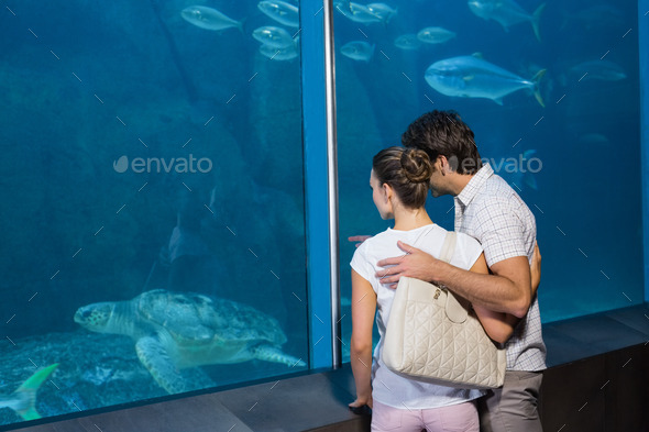 Happy couple looking at fish tank at the aquarium - Stock Photo - Images