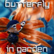 Butterfly in Summer Garden - VideoHive Item for Sale