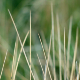 Wind Moving Dry Grass on Green Background - VideoHive Item for Sale