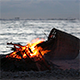Bonfire on the Beach - VideoHive Item for Sale