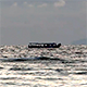 Small Boat Cruising on the Sea - VideoHive Item for Sale