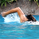 Man Swimming in the Pool 6 - VideoHive Item for Sale