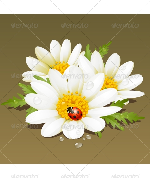 Vector Camomile floral ornament. - Flowers & Plants Nature