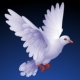 Vector white dove - GraphicRiver Item for Sale