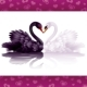Two graceful swans in love - GraphicRiver Item for Sale
