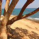 Tree Growing By the Sea - VideoHive Item for Sale