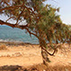 Lonely Tree Growing By the Sea - VideoHive Item for Sale