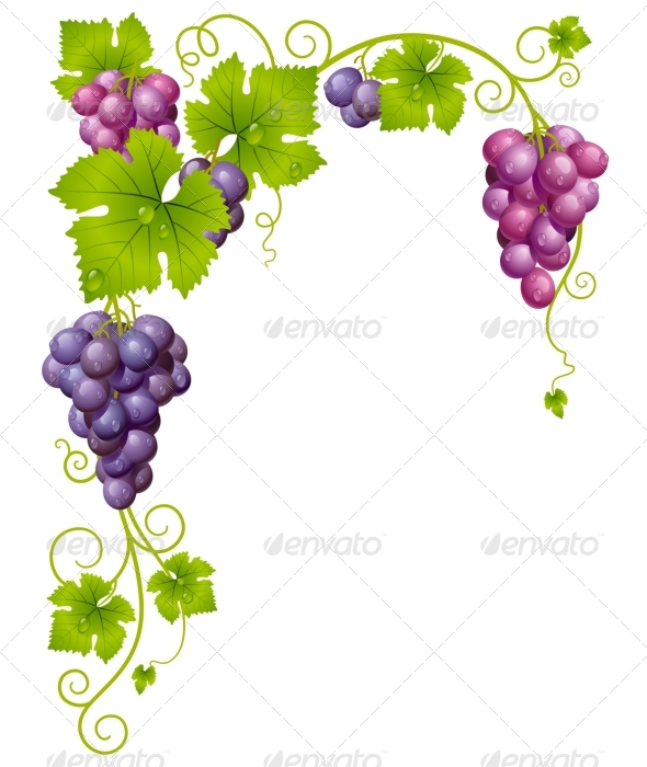 Vector grape frame 03 - Backgrounds Decorative
