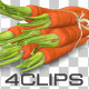 Fresh Carrots - VideoHive Item for Sale