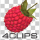Raspberry - VideoHive Item for Sale
