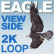 Eagle - VideoHive Item for Sale