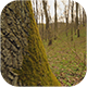 Mossy Tree In The Forest - VideoHive Item for Sale