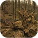 Fallen Tree In The Forest - VideoHive Item for Sale