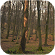 Temperate Forest - VideoHive Item for Sale