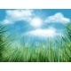 Background with Grass and Sky - GraphicRiver Item for Sale