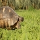 Turtle on Grass - VideoHive Item for Sale