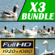 Geese in the Lake - VideoHive Item for Sale