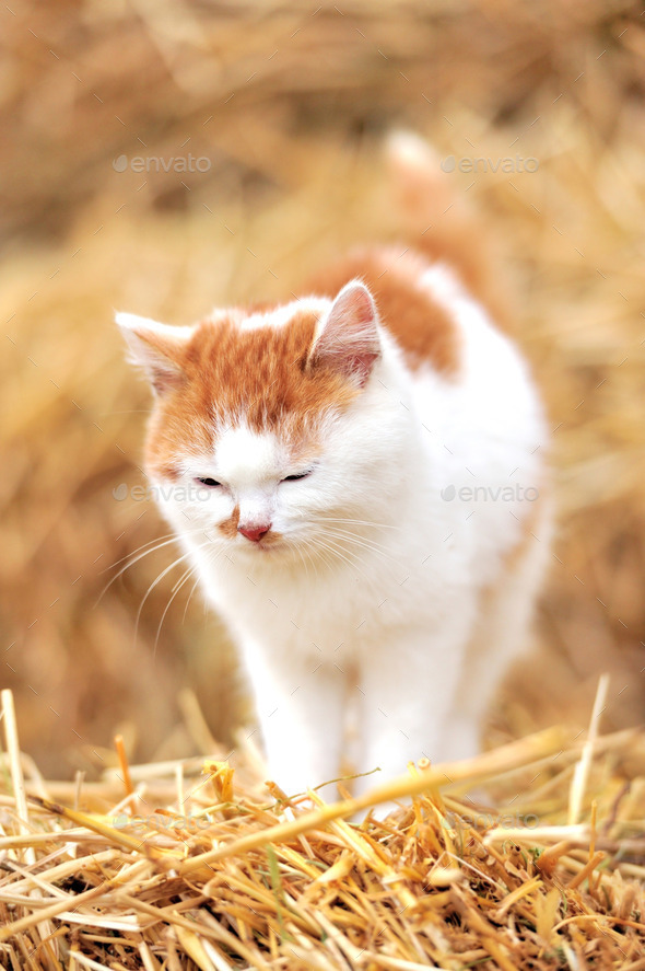 Cat on a straw - Stock Photo - Images
