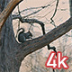 Squirrel in Central Park - VideoHive Item for Sale