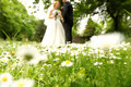 Chamomile flowers with bride and groom in the background