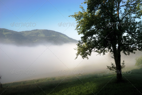Tree in the fog - Stock Photo - Images