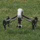 Quadcopter Drone Take Off and Land - VideoHive Item for Sale