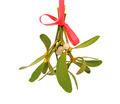 Mistletoe over white - PhotoDune Item for Sale