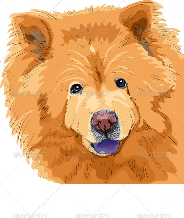 Vector Color Sketch of a Dog Chow-Chow Breed - Animals Characters