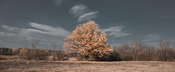 Tree 590 242