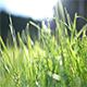 Through Grass Part 1 - VideoHive Item for Sale