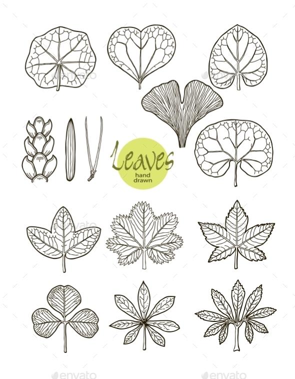 Leaves  - Flowers & Plants Nature
