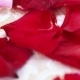 Rose Petals On Table - VideoHive Item for Sale