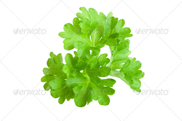 Spices: Fresh parsley leaves over white background - Stock Photo - Images