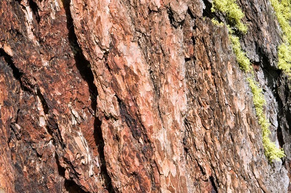 Tree bark with moss - Stock Photo - Images