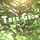 Tree Grow Openers - VideoHive Item for Sale