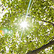 Sun Light is Breaking Through Leaves - VideoHive Item for Sale