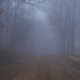Scary Foggy Forest Road - VideoHive Item for Sale