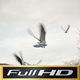 Pigeons Flying Away - VideoHive Item for Sale