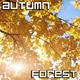 Autumn Tree in Sun Beams