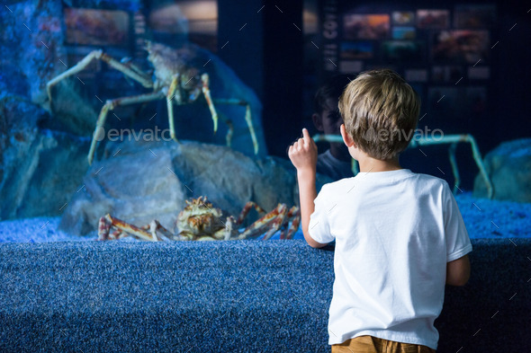 Young man pointing a giant crab in a tank at the aquarium - Stock Photo - Images